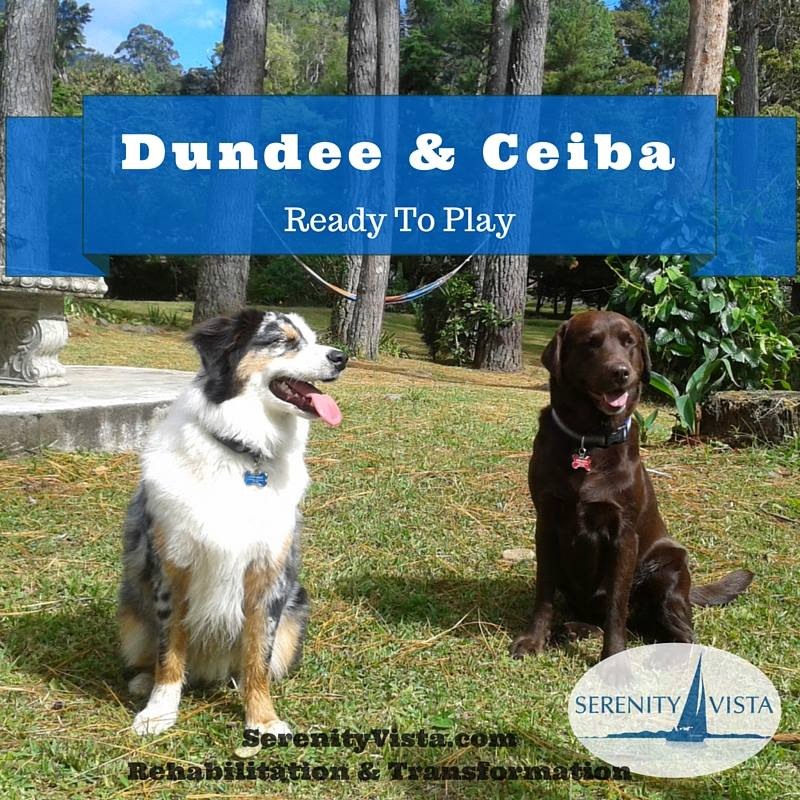 Serenity Vista drug rehab canine therapy pet dogs Ceiba & Dundee