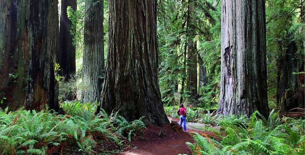 Oaks And Redwoods Addiction Recovery