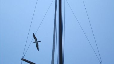 Bird flying over sailboat