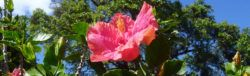 Hibiscus flower at drug rehab