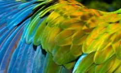 Alcohol Treatment Panama Parrot