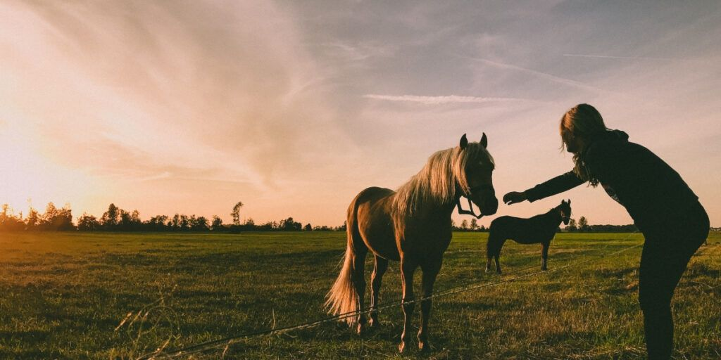 Horses in my recovery can change outcomes