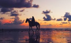 Horse walking on the beach in the sunset