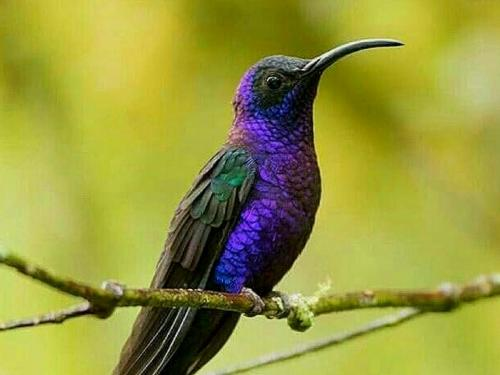 Coffee Cherries During Coffee Tour